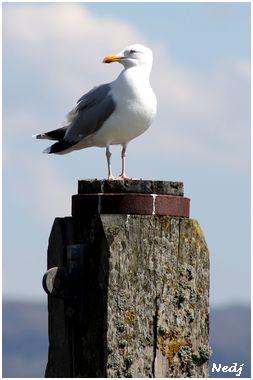 I love sea gulls