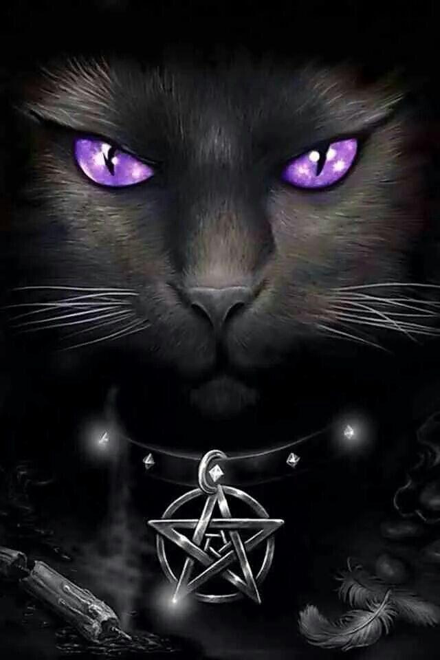Gothic cat with purple eyes fantasy cats pinterest cats eyes and gothic - Gothic hintergrundbilder ...