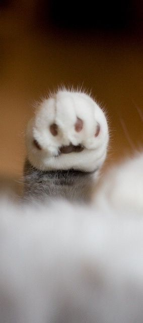 Paw. ≧^◡^≦ art of the cat photography. Cat paws are my fave!