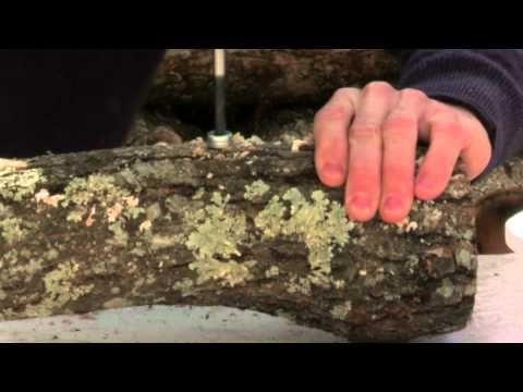 how to grow shiitake mushroom in ontario