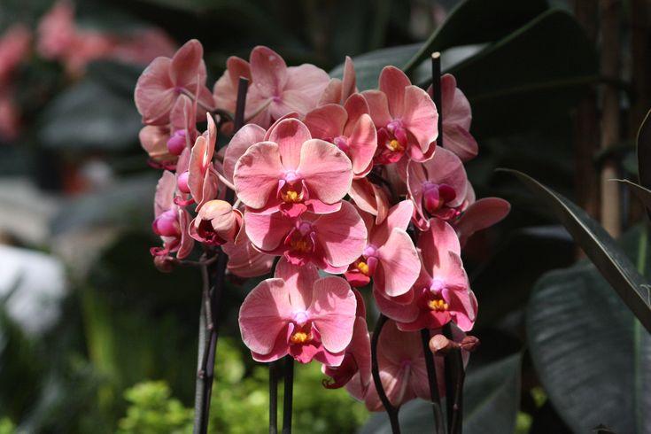 Orchid #orchid #flowers #flower #pink #green #freshflowers #vilmamoquist