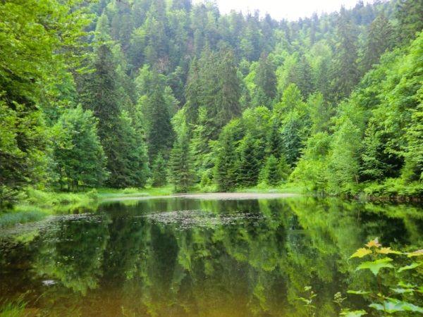 randonnee-du-lac-des-corbeaux-la-bresse #lac #promenade #paysage #rando #randonnée #vosges www.justacote.com