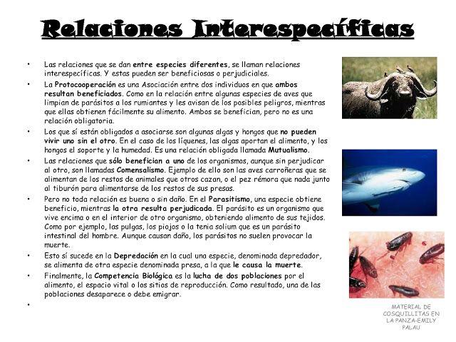 APOYO ESCOLAR ING MASCHWITZT CONTACTO TELEF 011-15-37910372: LOS ECOSISTEMAS ( CON ACTIVIDADES )