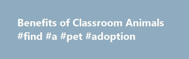 """Benefits of Classroom Animals #find #a #pet #adoption http://pet.remmont.com/benefits-of-classroom-animals-find-a-pet-adoption/  Benefits of Classroom Animals Classroom Pets Stimulate Learning Classroom animals are wonderful resources for teachers to make learning fun in all subjects! Pets Bring so Many New Ways to Learn Whether it's Math (""""how much does a hamster weigh?"""") or Science, (""""what does a snake eat?"""") Geography (""""what part of the world do ferrets come from?"""") or Grammar (""""what…"""