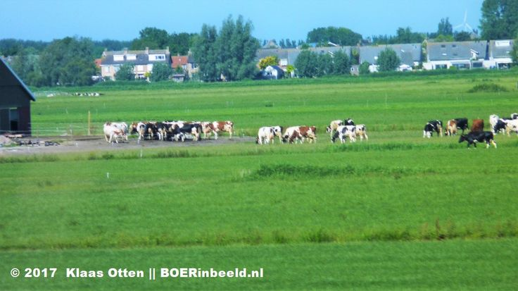 Cows !!! 😃😍