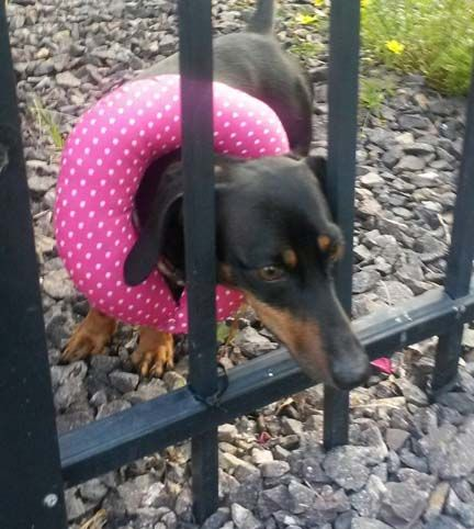 17 Best Images About Puppy Bumpers 174 On Pinterest Shops