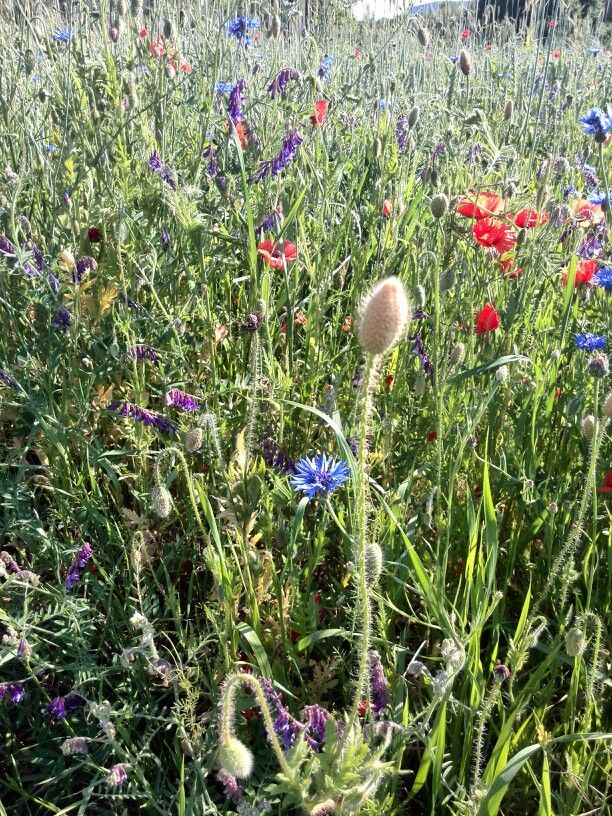 Wild flowers screaming of juice