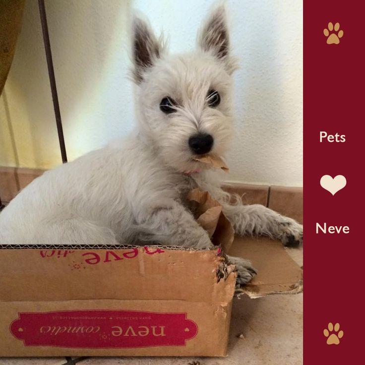 Anche le nostre scatole sono buone?   #nonlosapevamo #nevesispalma #nonsimangia  #PetsLoveNeve #NeveCosmetics
