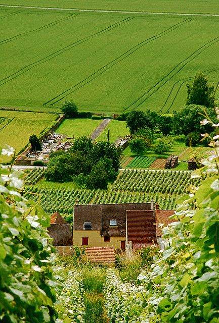 Champagne Fields , France