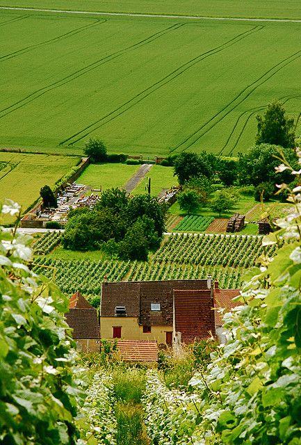 travel | le coeur de france - champagne fields in france