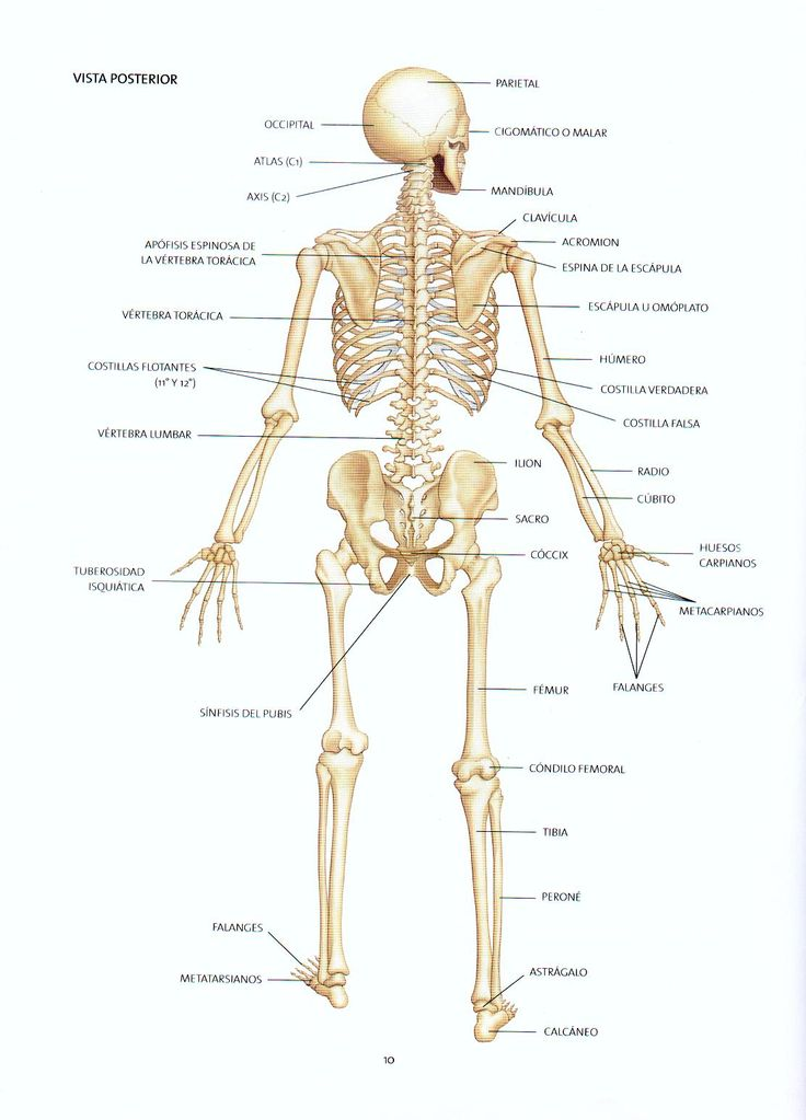 18 best BIOLOGIA images on Pinterest   Plants, Garlic and Human anatomy