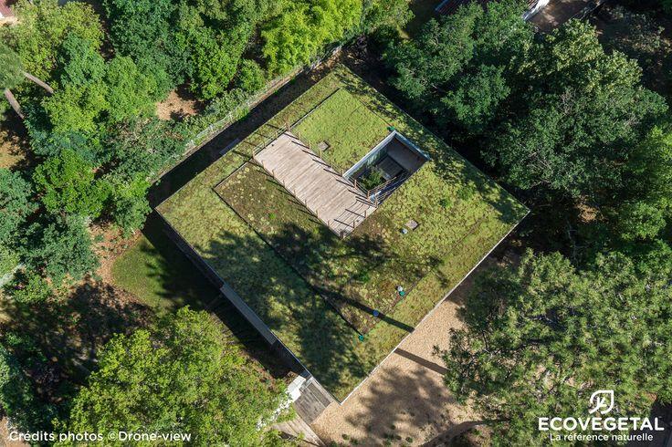 40_HOSSEGOR_Maison M Pargade_Succu Saxa_272m² http://www.ecovegetal.com/