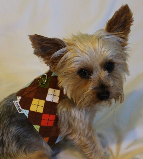 XSMALL Brown Argyle Dog Harness by SoBellePets on Etsy, $15.00Argyle Dogs, Dogs Harness, Brown Argyle, Size Medium, Medium Brown, Dog Harness, Xsmall Brown