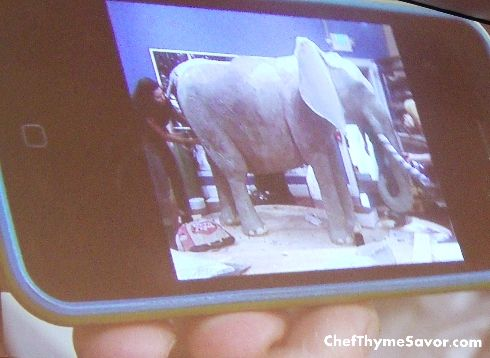 Life Size Elephant Cake from Duff Goldman of Ace of Cakes