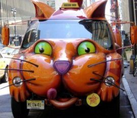 Unique Cars Shaped Cats