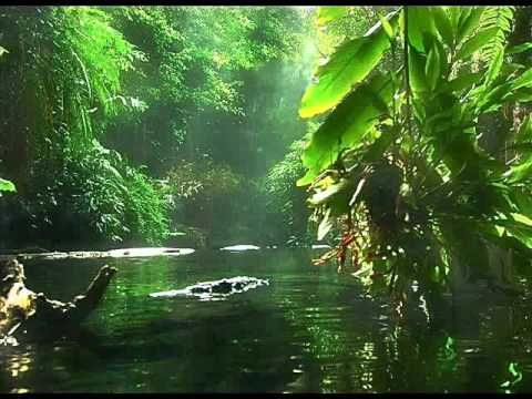 "Negro River"" by Uakti & Philip Glass - YouTube"