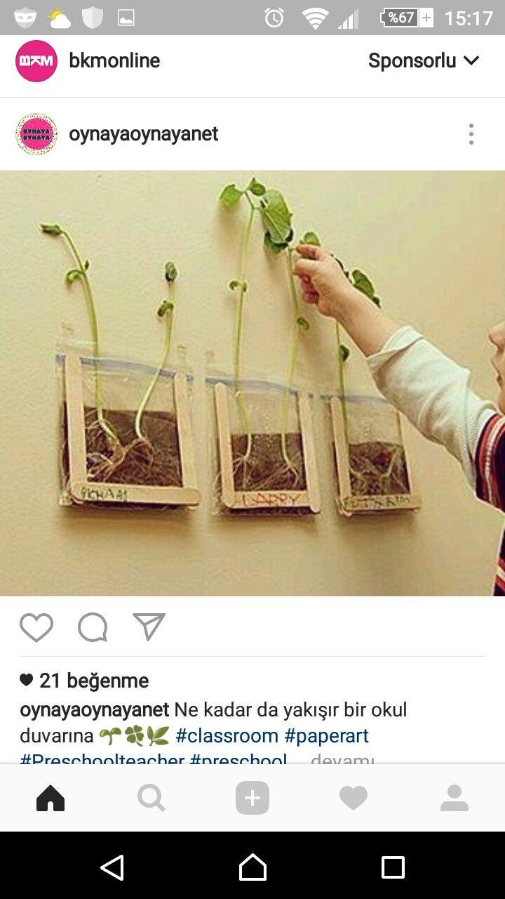 Bitki cimlendirme