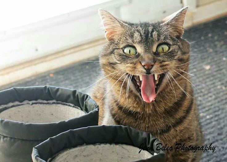 Crazy cat. #my cat