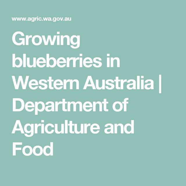 Growing blueberries in Western Australia | Department of Agriculture and Food