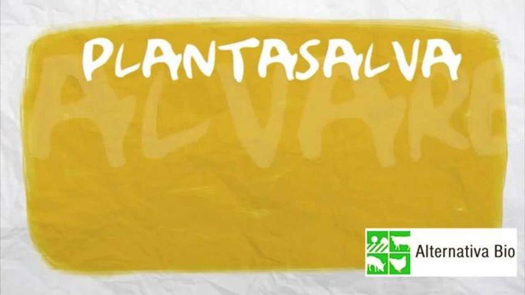 Plantasalva