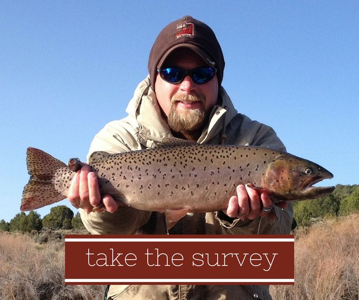 Take this survey and help us shape 2016 39 s utah fishing for Sand hollow fishing report