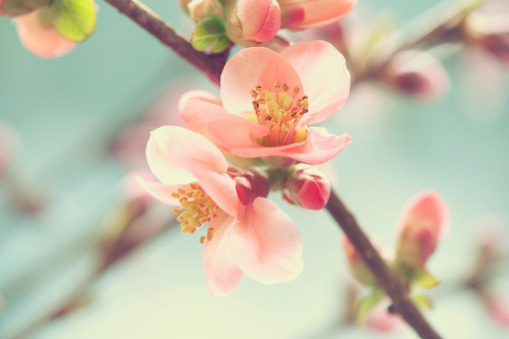 Japan's Cherry Blossom - 15 Facts About Sakura | Travel Indochina (Australia)