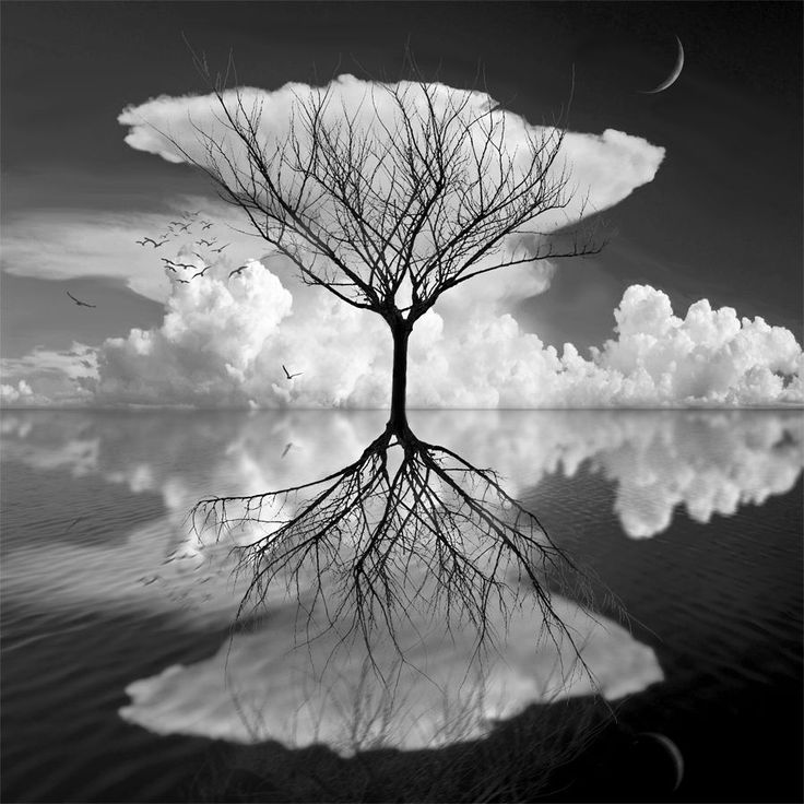 .: Wall Art, Water Reflections, Black And White, Trees Of Life, Black White, White Trees, Magic Place, Photo, Mirror Images