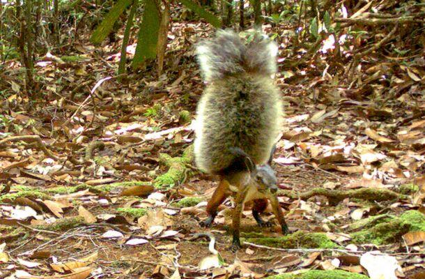 Nem bírod ki nevetés nélkül! Fotó a világ legszőrösebb mókusáról | femina.hu