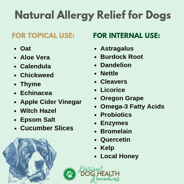 Natural Remedies For Dog Allergies Natural Allergy Natural Allergy Relief Canine Allergies