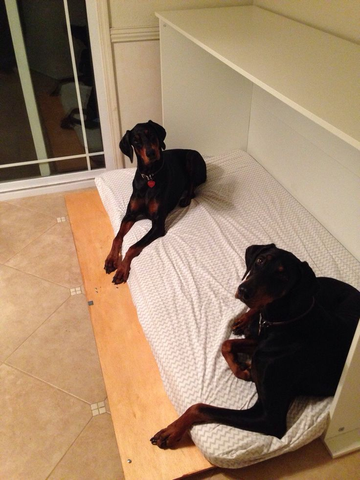 Murphy bed for dogs! Genius! I reckon I could make this... After watching a few YouTube videos