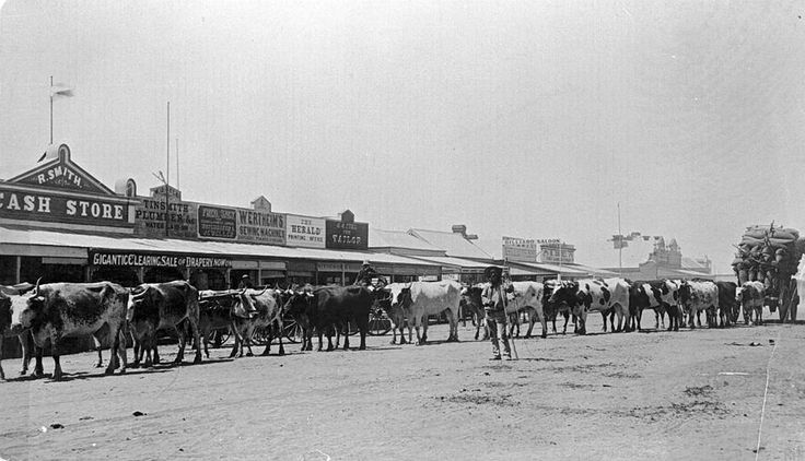 A bullock team in Scott Street, Warracknabeal in 1894. R. Smith's Cash Store is in the background.