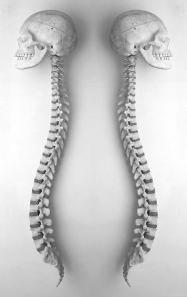 Deux squelettes qui sont opposés l'un a l'autre mais qui sont identiques ; on peut les superposer.