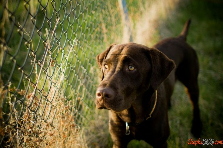 Photo charmant chien strict