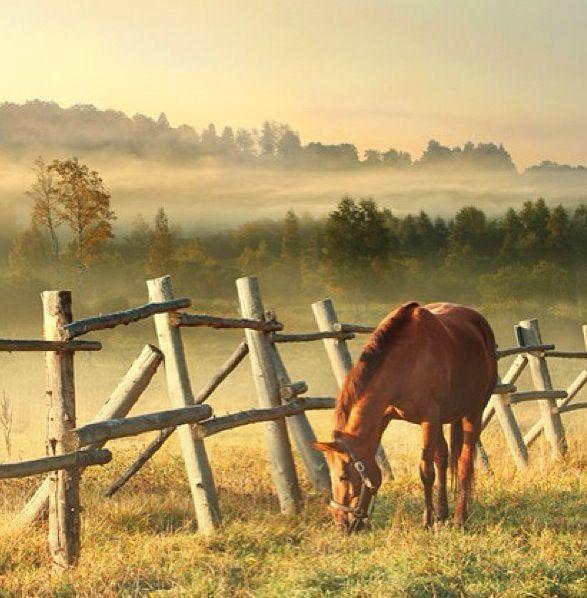 Farm; love these fences