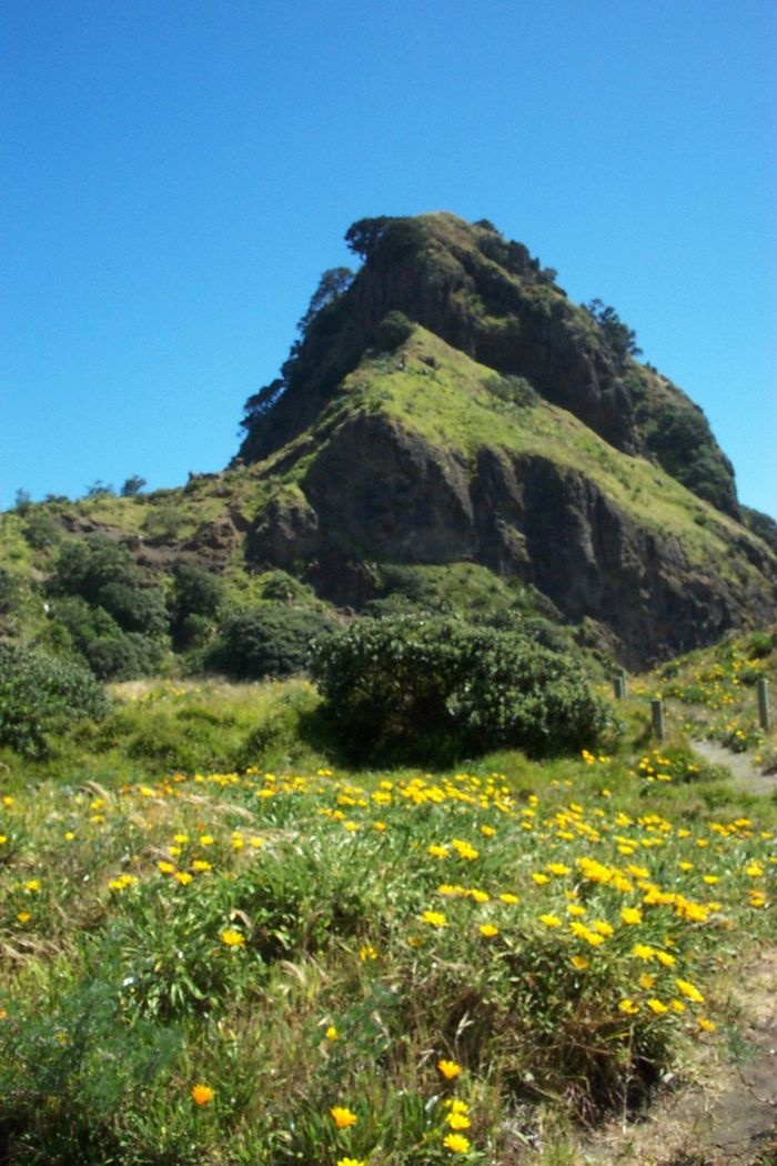 view of Lion's Rock at Piha Beach