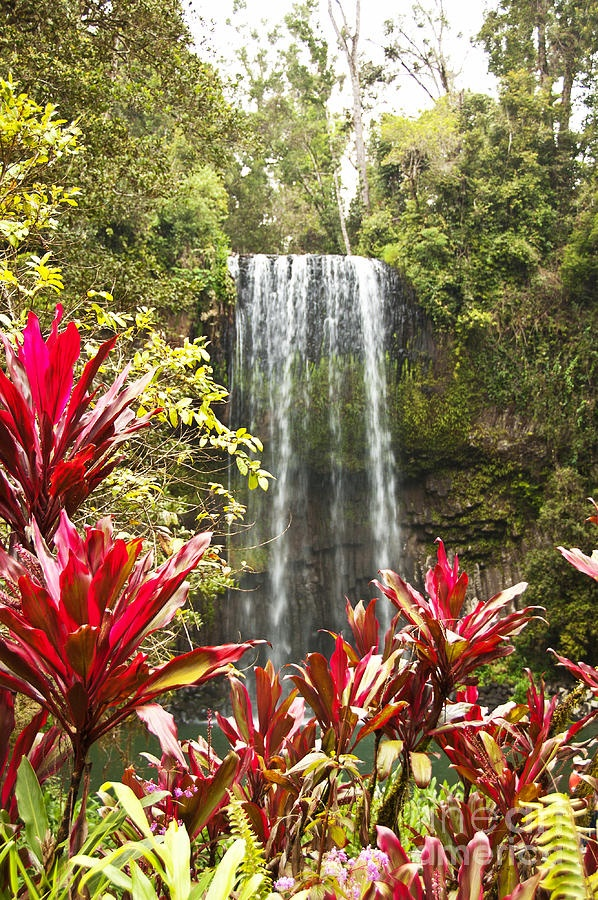 Millaa Millaa Falls in Far North Queensland, Australia