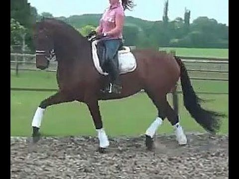 www.sporthorses-online.com 2009 KWPN St Georges mare for sale 17. 1 hh