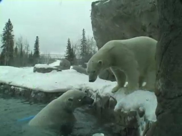 Polar Bear habitat in Cochrane Ontario...such a shame it's closed.