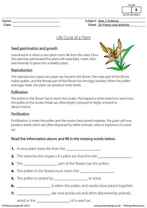 PrimaryLeap.co.uk - Life cycle of a plant Worksheet