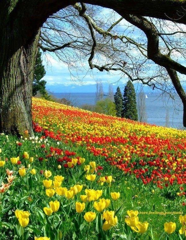 joli paysage de printemps c 39 est le printemps bonjour les hirondelles pinterest. Black Bedroom Furniture Sets. Home Design Ideas