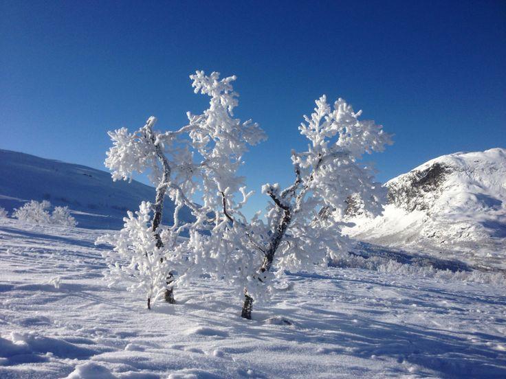 Winter in Norway, Filefjell