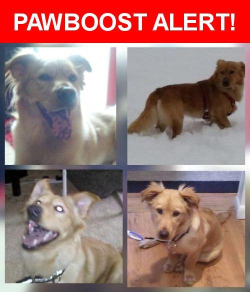 Please spread the word! Leo was last seen in Dumfries, VA 22026.    Nearest Address: Near Banks Ct & Old Triangle Rd