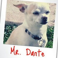 My beloved dogie: Mr. Dante!