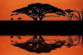 Bildergebnis für afrika design