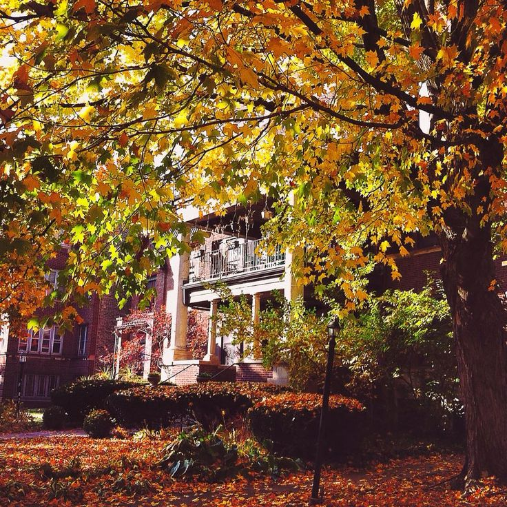 Fall magic in Hyde Park, #Chicago.  #travel #viaggi