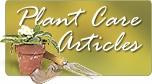 Sage Garden Herbs - Corn, Blue Jade OG