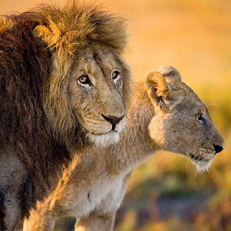 Lion & Safari Park Home