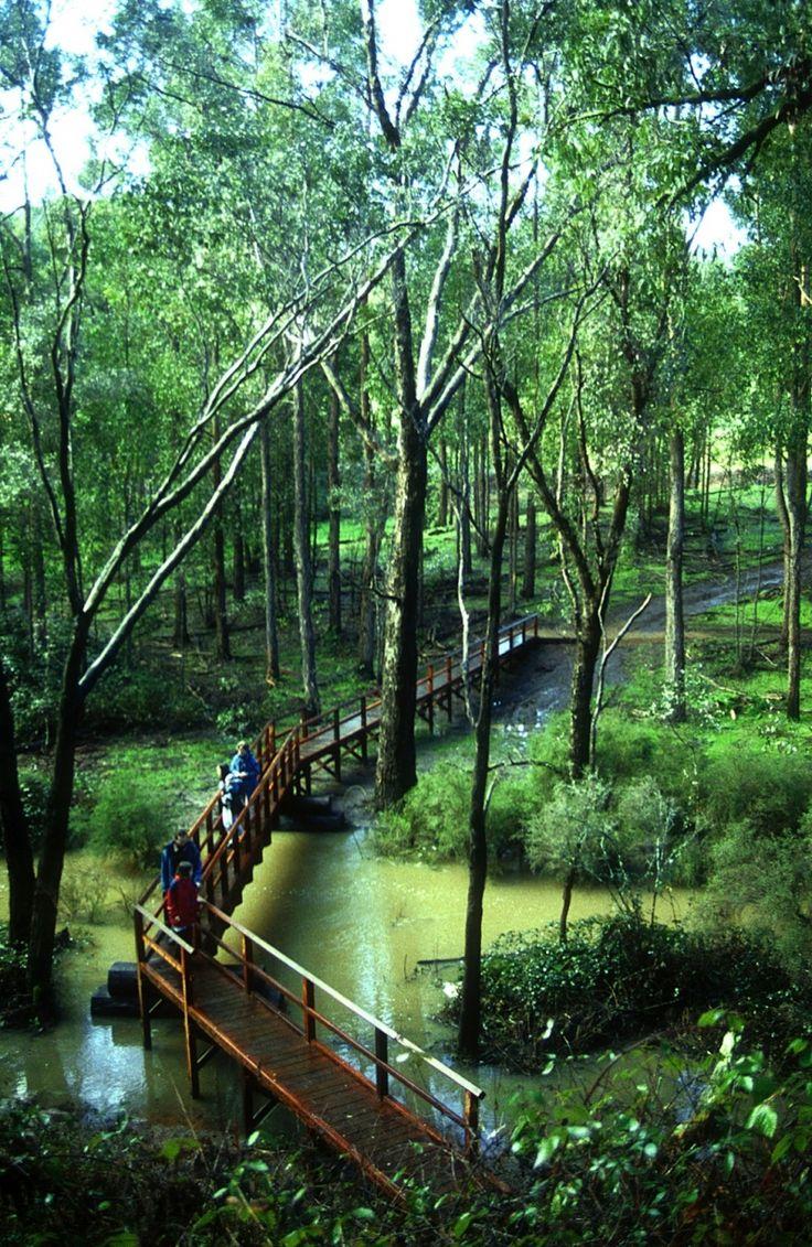 Balingup to Donnelly River Village | Bibbulmun Track, Western Australia