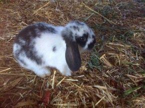 I Conigli di Giorgio
