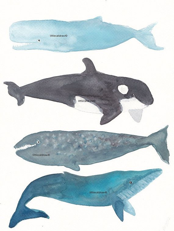 Whales Watercolor Painting  Art Print by littlecatdraw on Etsy, $8.00